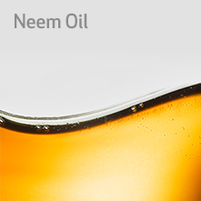 neel-oil-square